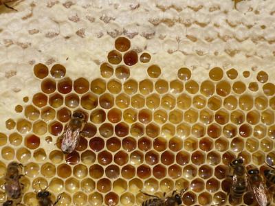 2008 07 06 Purple Hive