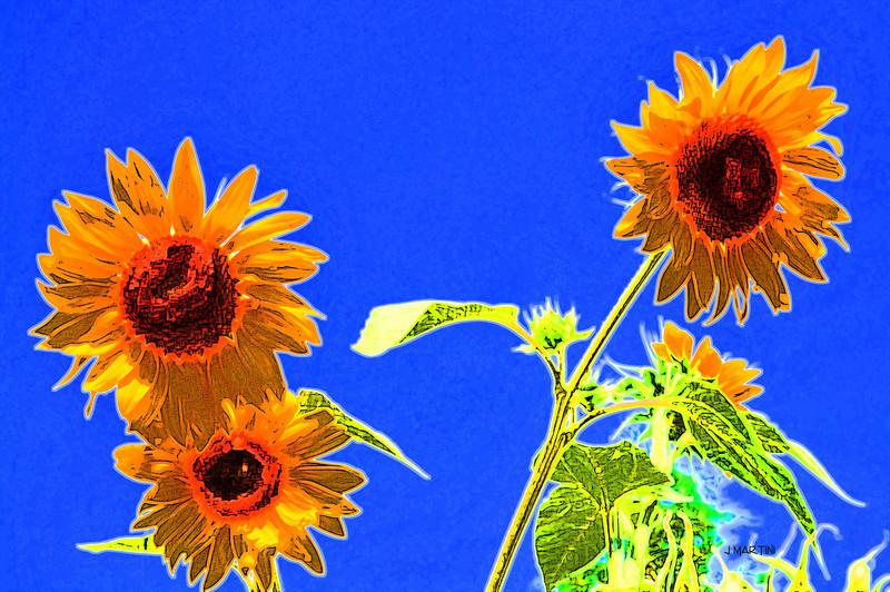 good morning sunflower 8-7-2009.jpg