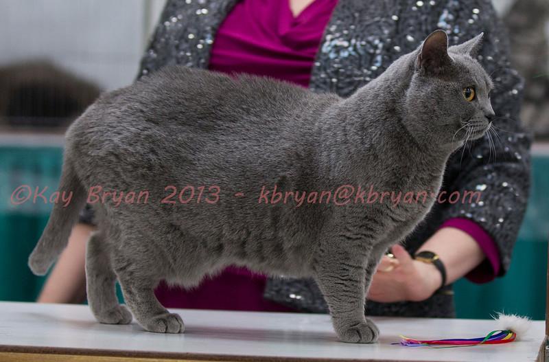 CatShow2014104_1.jpg