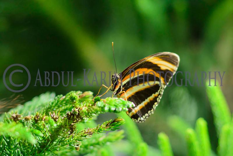 Butterfly Conservatory , 10/2011
