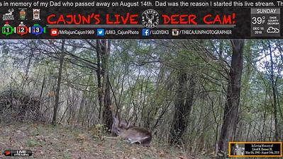 As Seen Live on Cajun's Live Deer Cam