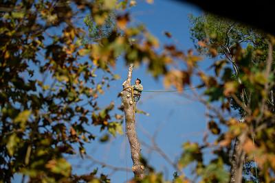 2019-10_Tree Trimming