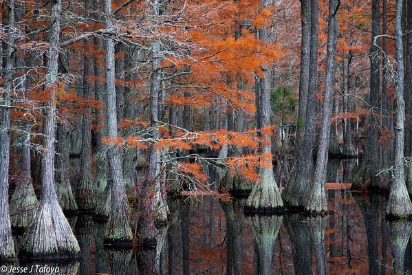 Carver's Creek State Park