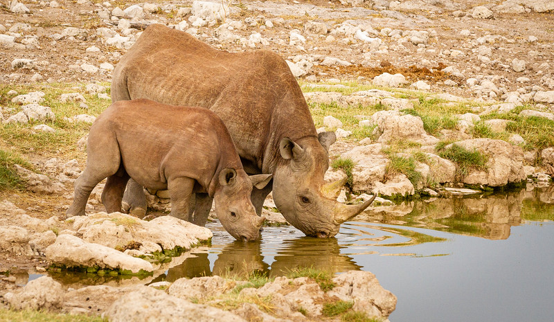 Rhino scenes 1