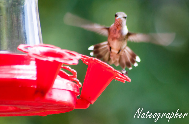 HummingBirds-4191.jpg