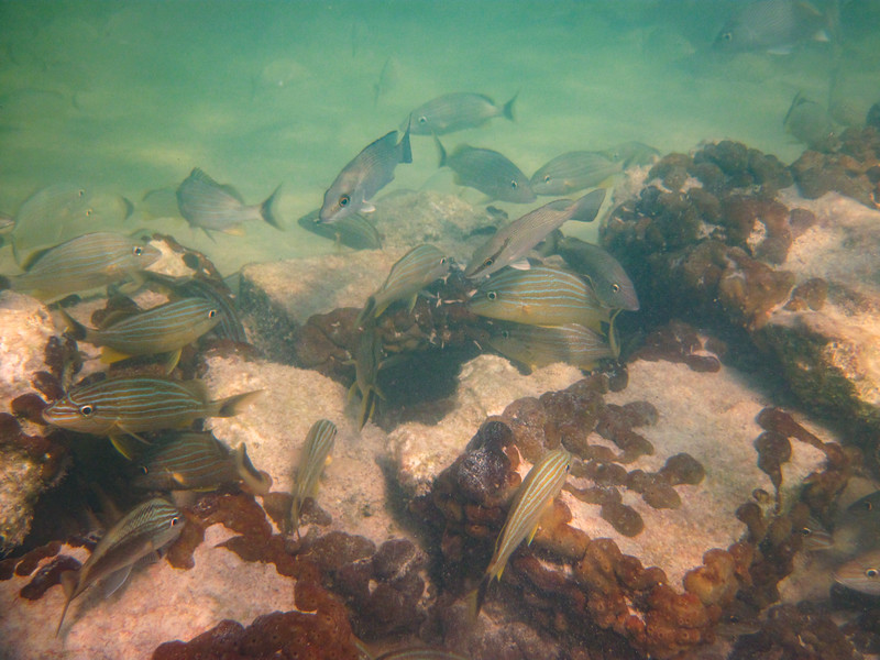 big torch key snorkeling 20
