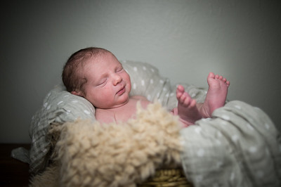 Baby Troiani