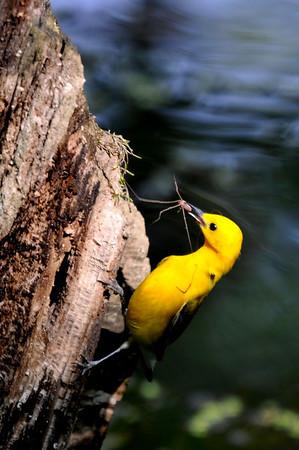 What do baby birds eat?