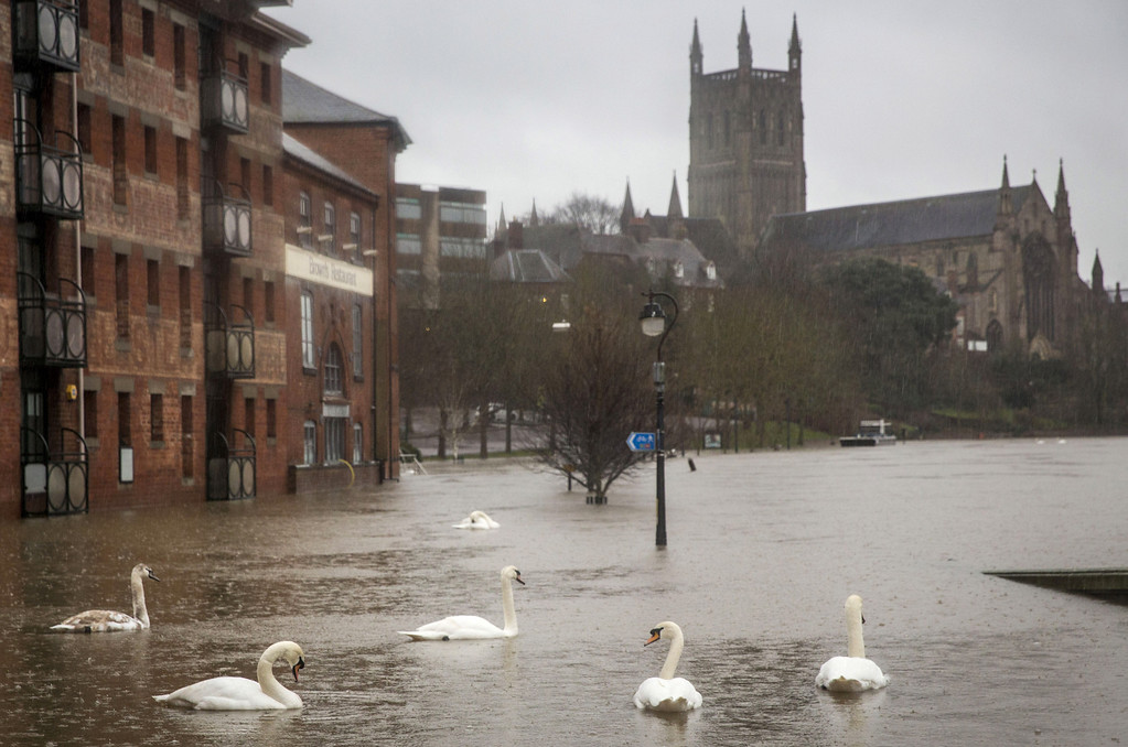 . Swans swim along a footpath near the banks of the River Severn on February 11, 2014 in Worcester, England. The Environment Agency has issued flood warnings for dozens of areas along the River Severn as forecasters predict more rain to come. (Photo by Rob Stothard/Getty Images)