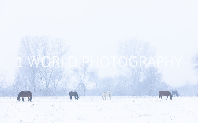 202101042021_1_4 Snow Scenes with Church, horses062--4.jpg