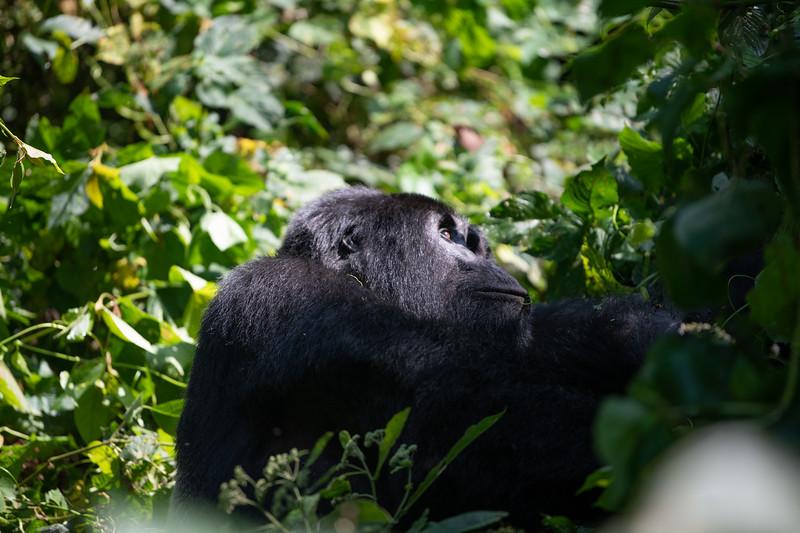 Uganda_T_Gor-923.jpg