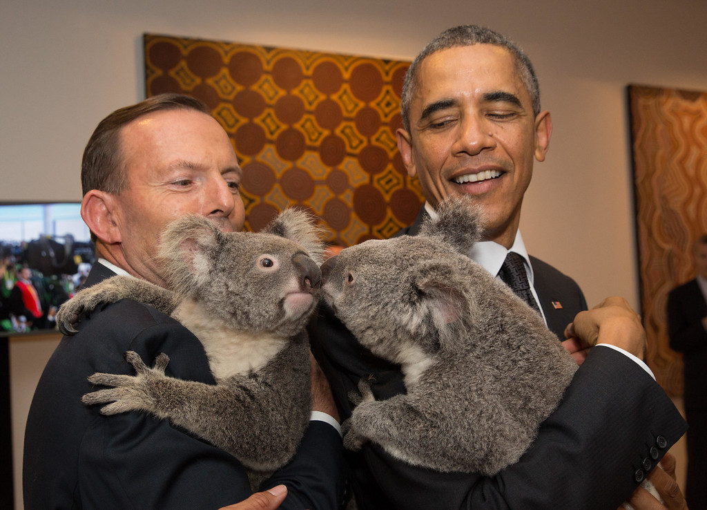 . BRISBANE, AUSTRALIA - NOVEMBER 15:  In this handout photo provided by the G20 Australia, Australia\'s Prime Minister Tony Abbott and United States\' President Barack Obama meet Jimbelung the koala before the start of the first G20 meeting on November 15, 2014 in Brisbane, Australia. World leaders have gathered in Brisbane for the annual G20 Summit and are expected to discuss economic growth, free trade and climate change as well as pressing issues including the situation in Ukraine and the Ebola crisis.  (Photo by Andrew Taylor/G20 Australia via Getty Images)