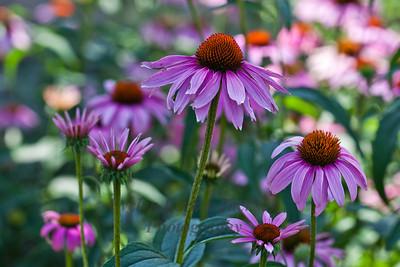 Flower Landscapes