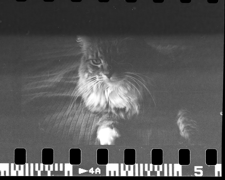 mark film scan-027.jpg