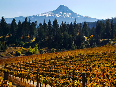 Columbia River Gorge National Scenic Area ,  Hood River Valley, The Dalles