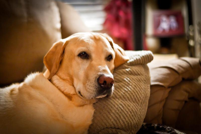 Maxx_couch.jpg