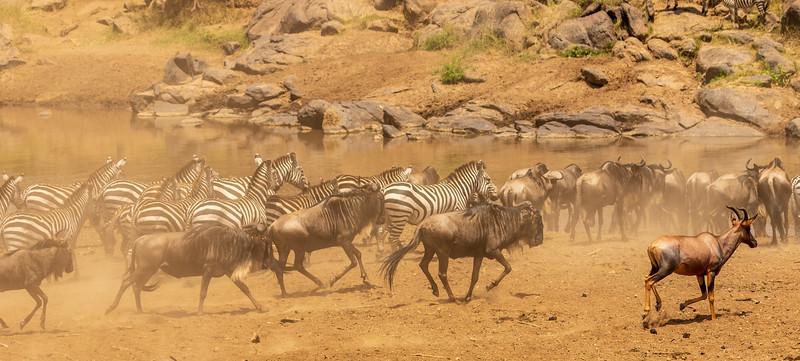 Kenya 2015-04565.jpg