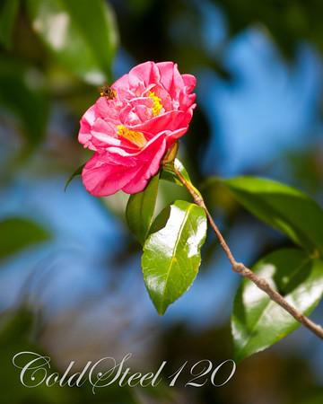 Brookgreen Garden Flowers 2012
