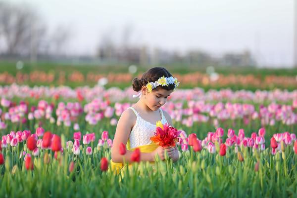 Tulip sessions