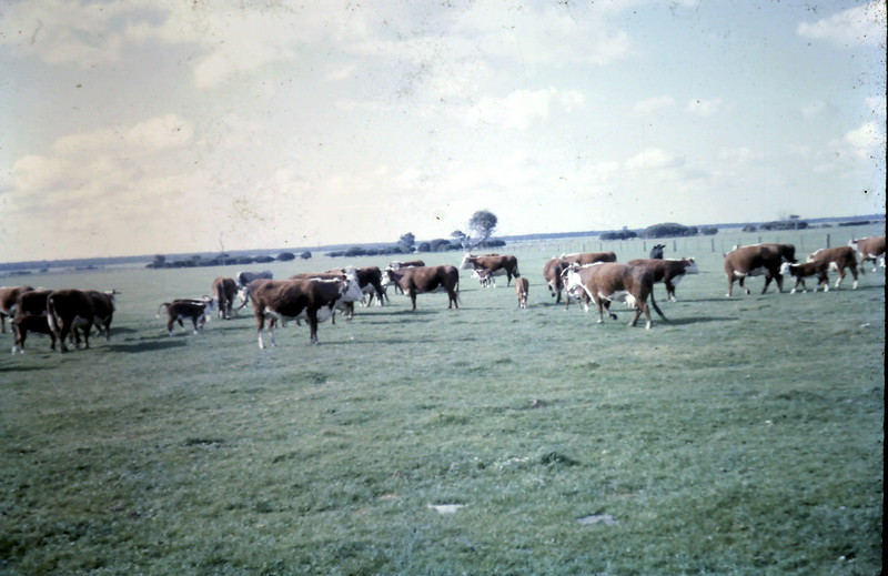 1965-10-3 (9).JPG