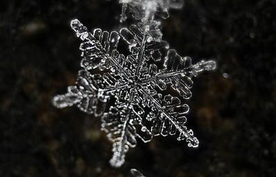Snowflake Photos