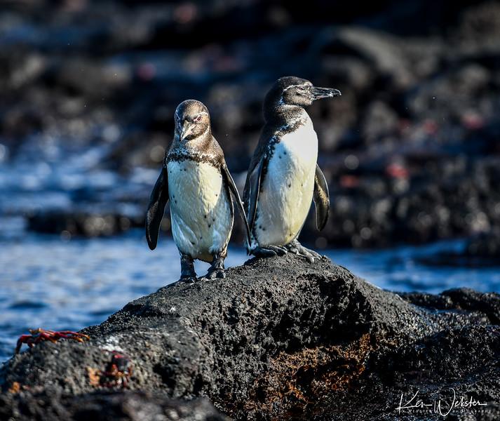 2018 Sombrero Island-6.jpg