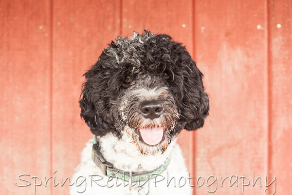 Client Gallery-Lexi (Dogs At Camp)