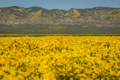 Carrizo Plain & Area