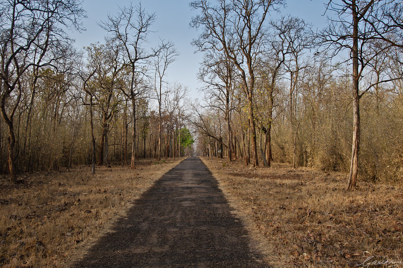 Moharli-Chandrapur Road | Tadoba, April 2012