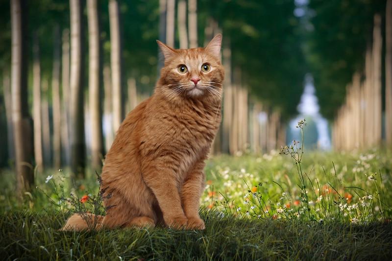 Orange-cat-3.jpg