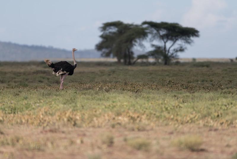 Tanzania_Feb_2018-287.jpg