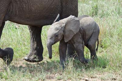 Africa Day 14 (Serengeti)