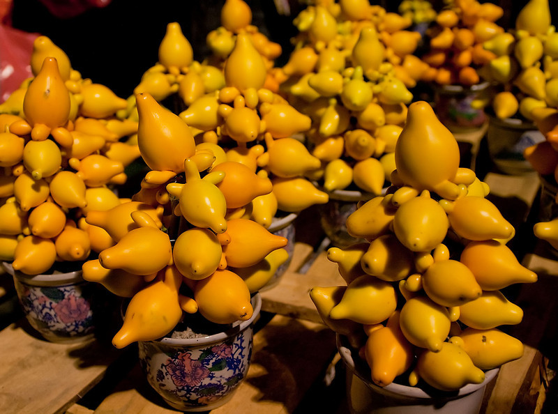 Solanum Mammosum - Don't go by the looks, it's poisonous