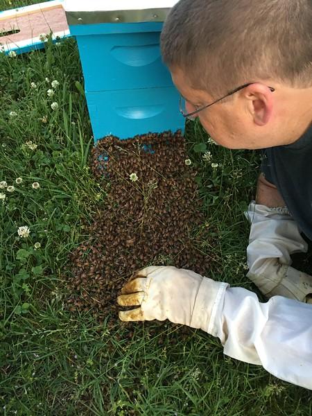 2016-05-06 Swarm on the Ground
