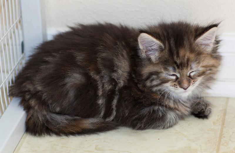 Kittens256.jpg