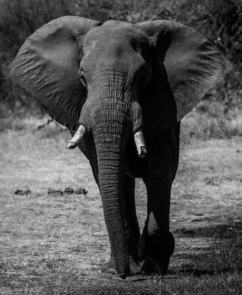 Botswana_June_2017 (2827 of 6179).jpg