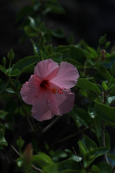 Kauai_D4_AM 174.jpg