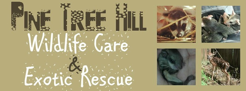 Pine Tree Hill Wildlife Rescue