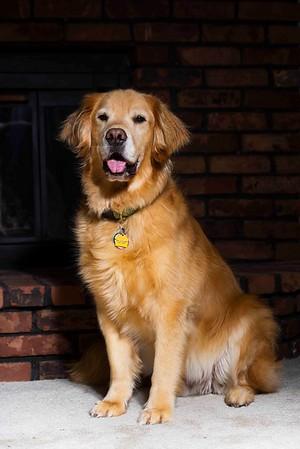 Pets | Pet Photography