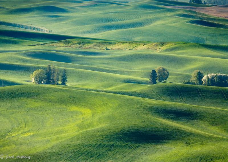 green wheat fields_2174.jpg