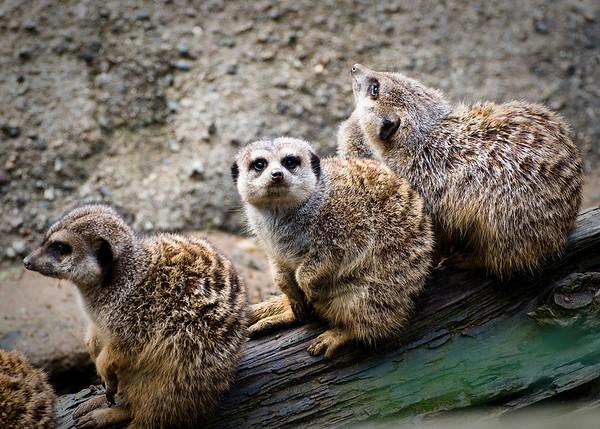 Oakland Zoo 12.22.08