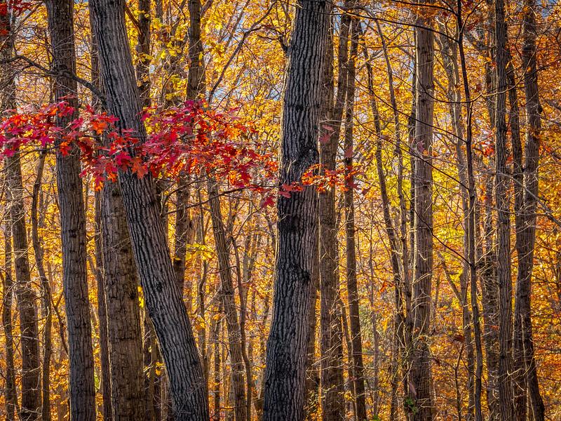 West Virginia Fall Colors.jpg