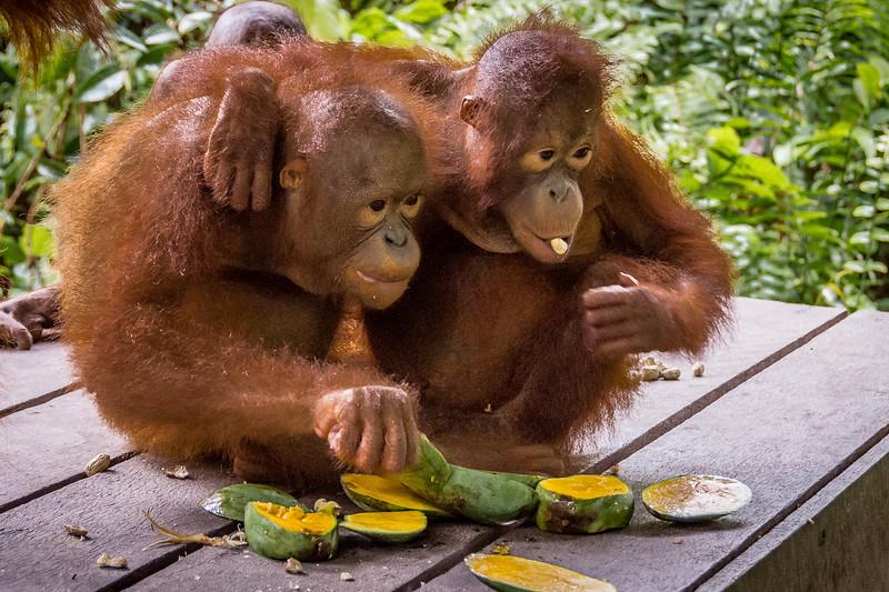 Borneo-2246.jpg