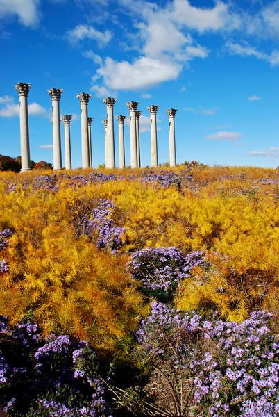 Arboretum October 2013 columns.jpg