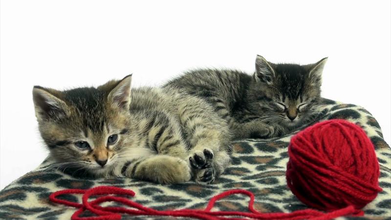 Kittens_tabby_001.mov