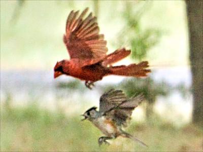 Busy Bird Restaurant