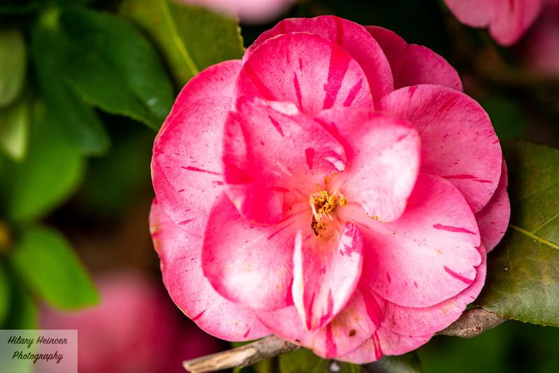 Flowers-17.jpg