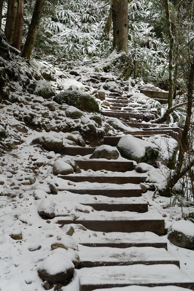 19_02_03 snow day in north van 0090.jpg