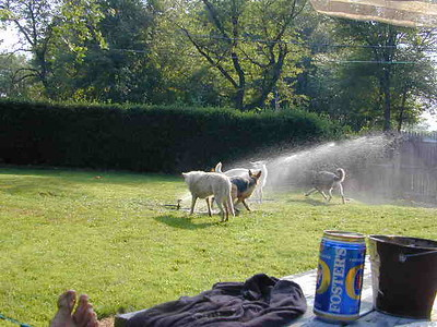 Dogs in the Sprinklers