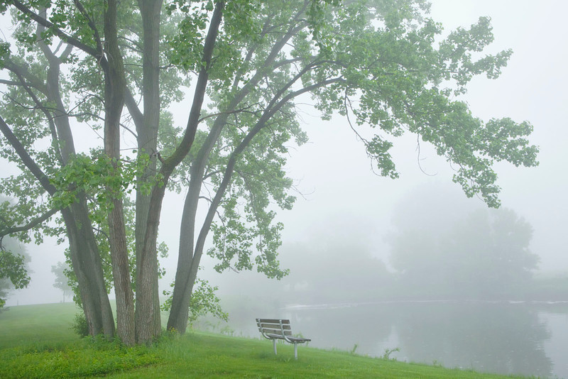 Spring trees and misty pond